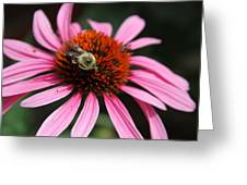 Purple Cone Flower 3 Greeting Card