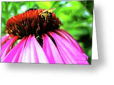 Purple Cone Flower Greeting Card by Maria Massimiano
