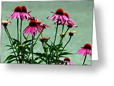 Purple Coneflower Bouquet Greeting Card