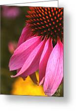 Purple Coneflower Close-up Greeting Card