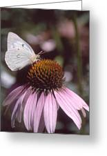 Purple Coneflower Greeting Card