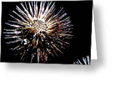 Purple Coneflower Seed Head Greeting Card