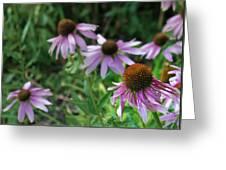 Purple Coneflowers Greeting Card