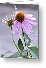 Purple Cornflowers Greeting Card