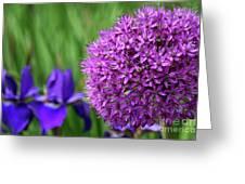 Purple Cotton Ball Greeting Card