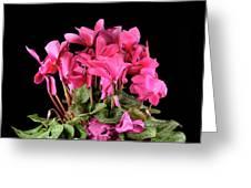 Purple Cyclamen Greeting Card