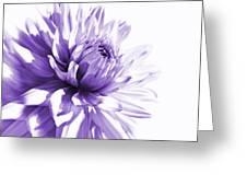 Purple Dahlia Floral Greeting Card