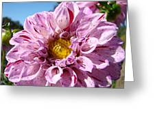 Purple Dahlia Flowers Pink Floral Art Prints Canvas Garden Baslee Troutman Greeting Card
