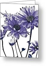 Purple Daisies Greeting Card