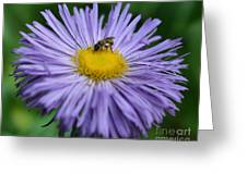 Purple Daisy And Guest Greeting Card