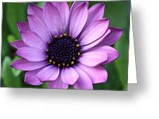 Purple Daisy Square Greeting Card