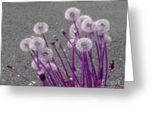 Purple Dandelions Greeting Card