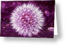 Purple Dandy Greeting Card