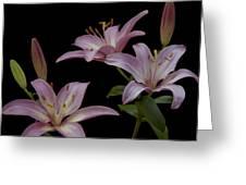 Purple Day Lilies Greeting Card
