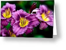 Purple Day Lillies Greeting Card