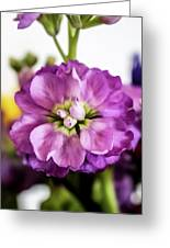 Purple Delphinium Greeting Card