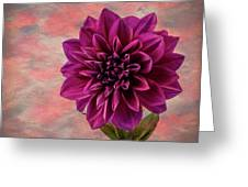 Purple Dhalia Greeting Card