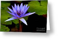 Purple Enchantment 6 Greeting Card