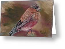 Purple Finch Greeting Card