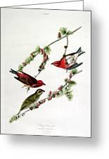 Purple Finch Greeting Card by John James Audubon
