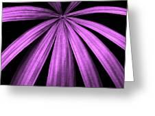 Purple Fireworks Greeting Card
