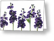 Purple Floral 1 Greeting Card