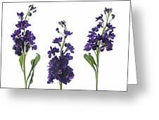 Purple Floral 2 Greeting Card
