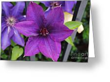 Purple Floral Greeting Card