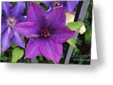 Purple Floral Greeting Card