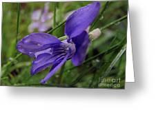 Purple Flower 2 Greeting Card