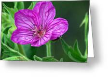 Purple Flower 2 Greeting Card by Marty Koch