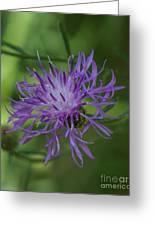 Purple Flower 8 Greeting Card