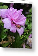 Purple Flower And Friend Greeting Card by Guy Ricketts