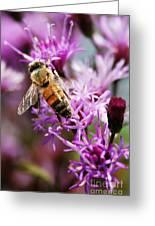 Purple Flower Bee Greeting Card