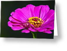 Purple Flower Close Up Greeting Card