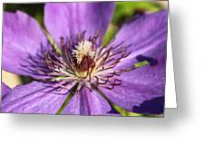 Purple Flower Greeting Card