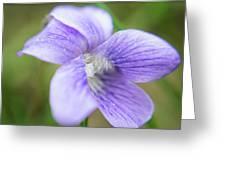 Purple Flower Macro Greeting Card