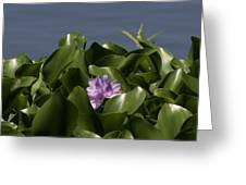 Purple Flower On Bayou Greeting Card