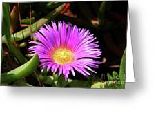 Purple Flower On California Coast Greeting Card
