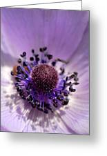 Purple Flower Universe Greeting Card