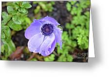 Purple Flowering Anemone Flower In A Lush Green Garden Greeting Card