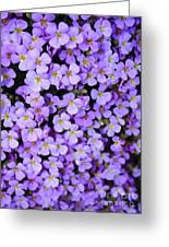Purple Flowers - Rockcress Greeting Card