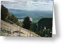 Purple Flowers At Table Rock Overlook Greeting Card by Kelly Hazel