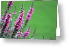 Purple Flowers In A Field Greeting Card