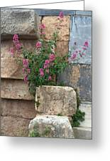 Purple Flowers In Ruins Greeting Card