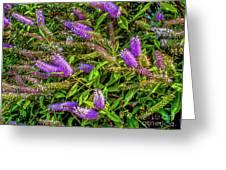 Purple Flowers Of Chiloe Greeting Card