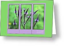 Purple Flowers Through A Window Greeting Card