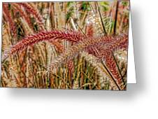 Purple Fountain Grass Abstract By H H Photography Of Florida Greeting Card