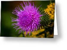 Purple Fringe Greeting Card