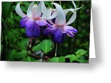 Purple Fuschia Greeting Card
